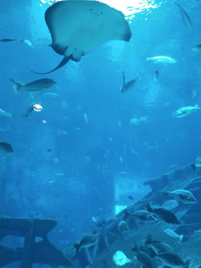 S.E.A Aquarium Sentosa Island