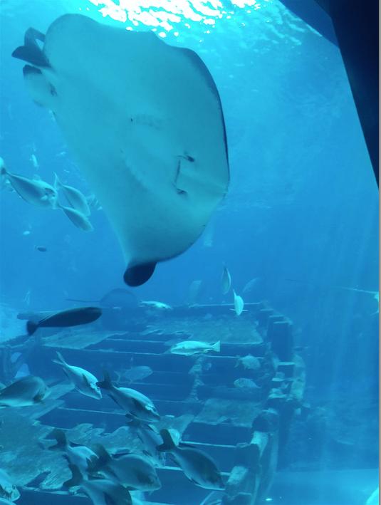 3.3 Sea Aquarium sentosa.png