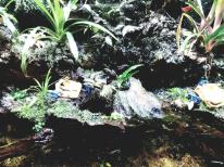 bright coloured frogs, sEA aquarium
