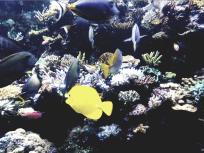 bright fishes, Sea Aquarium