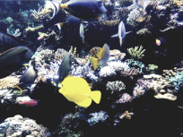 bright fishes, Sea Aquarium