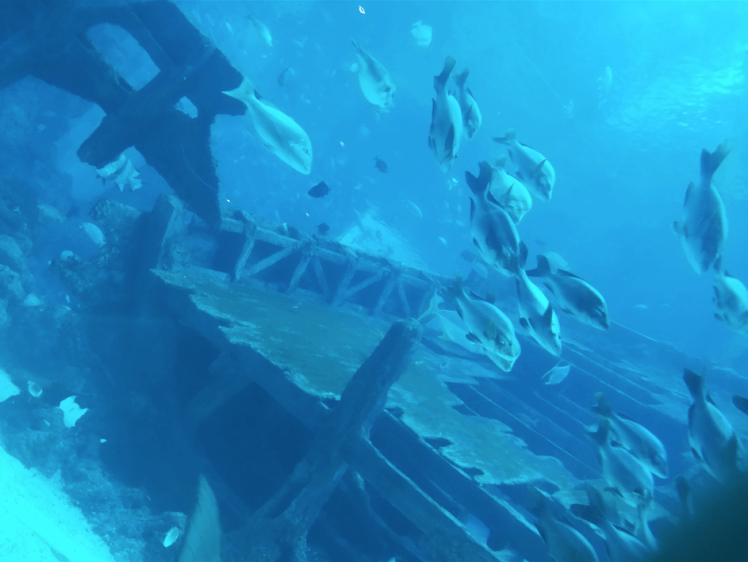 Ship wrek, Sea Aquarium.png