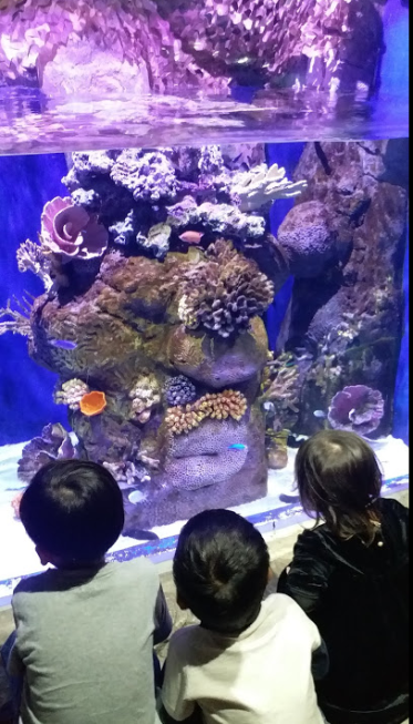 Aquarium at ocean pARK