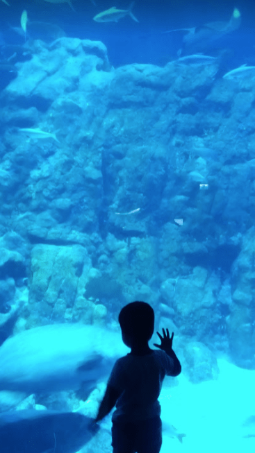 Sea Aquarium, Ocean park