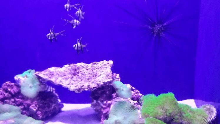 Aquarium, Oceans park.png