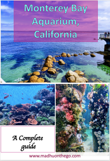Complete guide to Monterey Aquarium