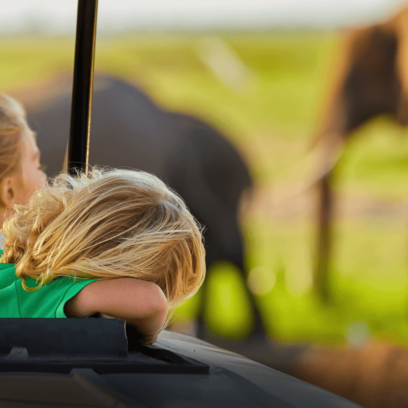 Two little girls are experiencing a Safari as they can be seen sitting looking at the wild animals in a distance.