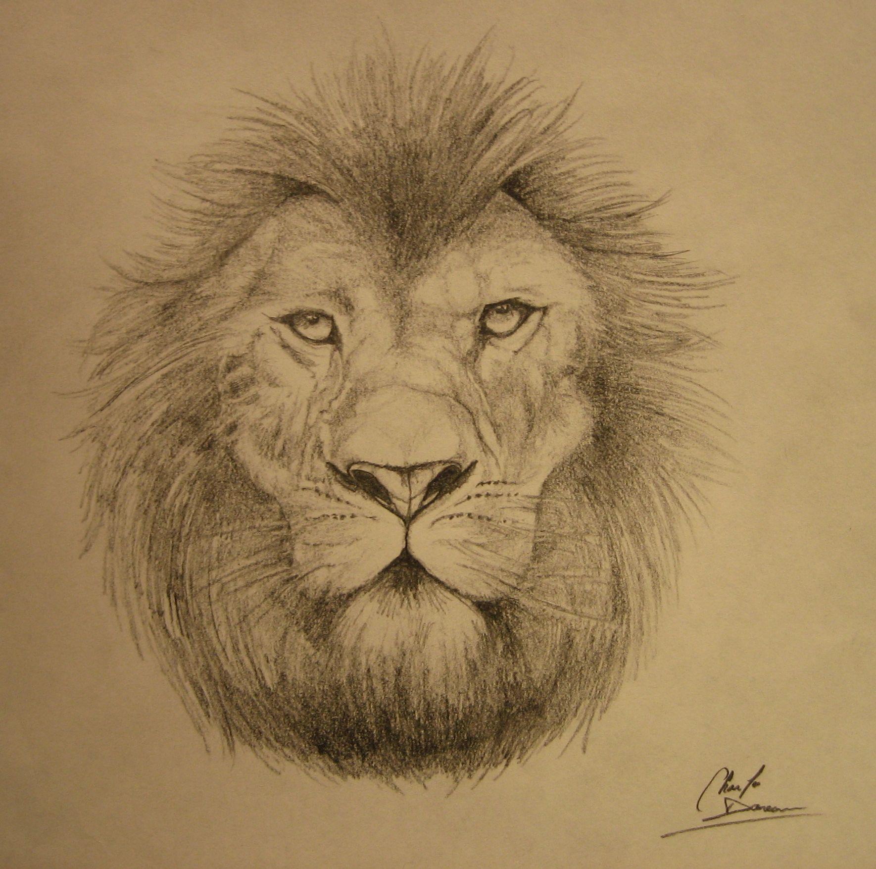 Lion_by_cdan777
