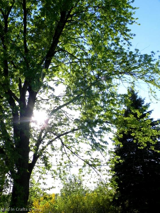 michigan-trees_thumb1