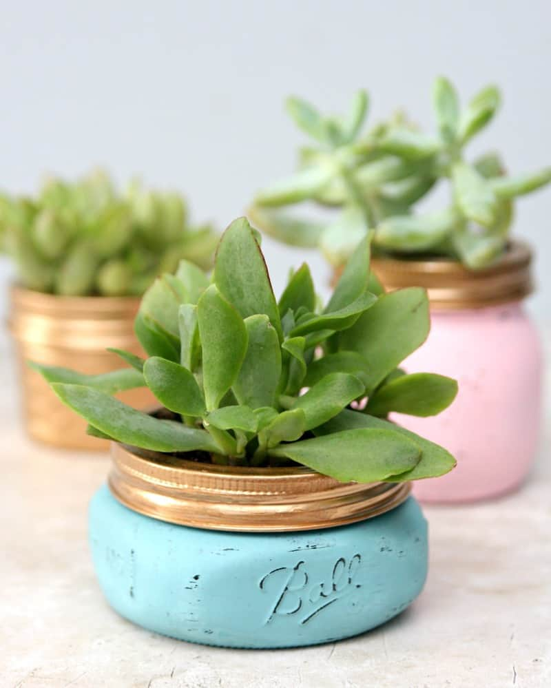 pastel painted mason jars with succulents