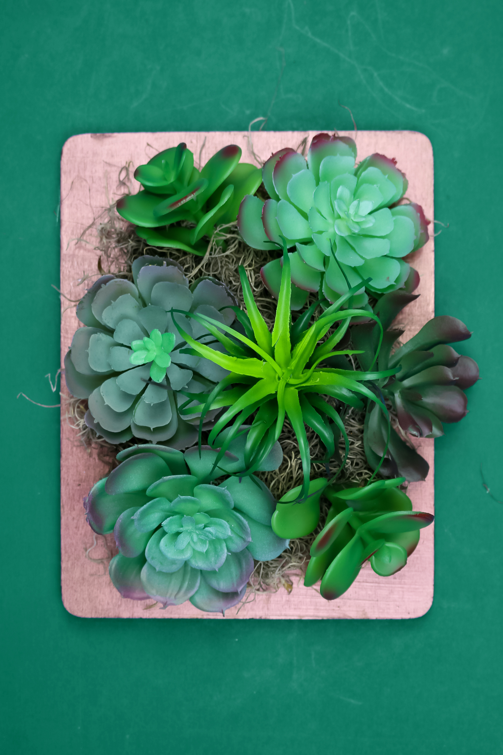 faux succulents in a copper frame on a green background