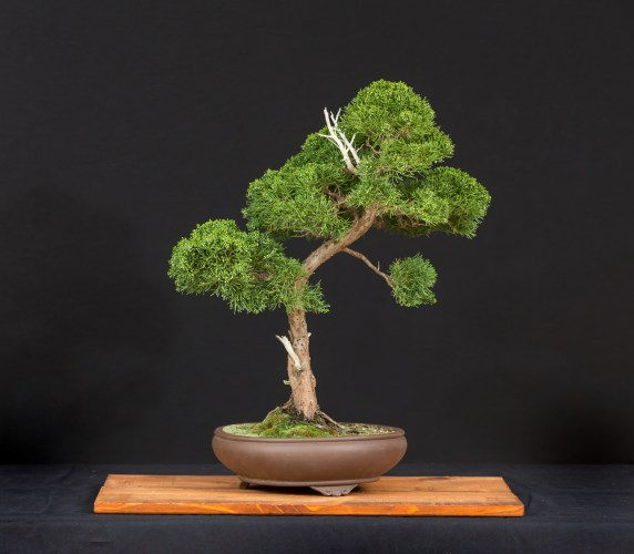How to create a bonsai - and keep it alive!