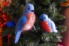 bluebirds for web