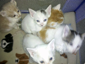 Kittens Left for Dead (2)