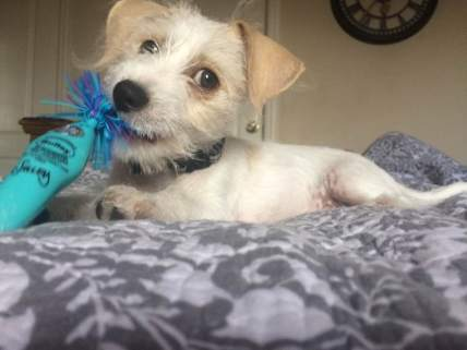 Anything is his toy