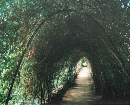 senseless beauty tunnel kindness