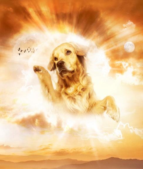 dog sends letter to god