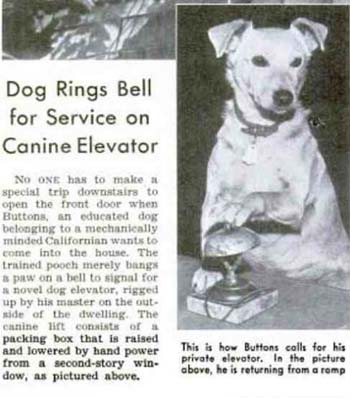 Dog rings bell for elevator service