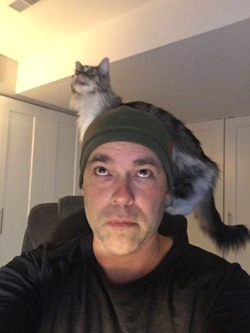 eliminate your credit card debt, cat on head