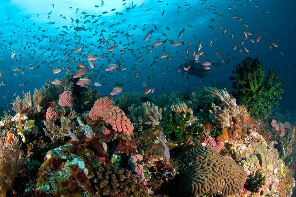Image result for Anilao diving spots (Mabini)