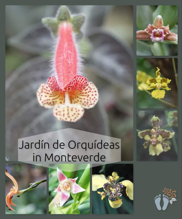 Costa Rica: Tag 02 und 03: Wanderung und Hängebrücken-Tour im Nebelwald Monteverde sowie Besuch des Orchideengartens 4