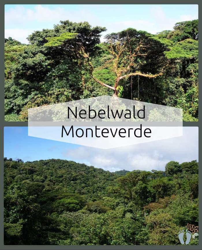 Costa Rica: Tag 02 und 03: Wanderung und Hängebrücken-Tour im Nebelwald Monteverde sowie Besuch des Orchideengartens 3
