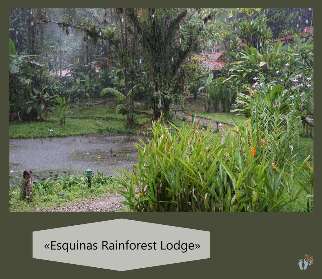 bei der «Esquinas Rainforest Lodge» {Reisetagebuch Costa Rica: Tag 14}