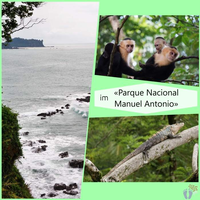 Costa Rica: Tag 16 und 17: Manuel Antonio National Park 6