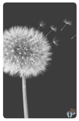 Blogparade: Welche Aspekte des Minimalismus lebst Du?: Pusteblume | Fotocredit @ pixabay - HG-Fotografie