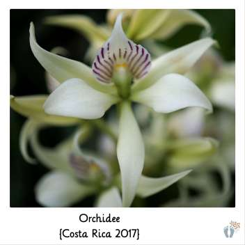 Orchidee {Costa Rica 2017}