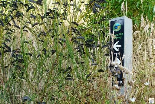 Küstenwanderung: Wegmarkierung {Reisetagebuch «Roadtrip durch Neuseeland mit dem Bus»: «Diamond Harbour»}