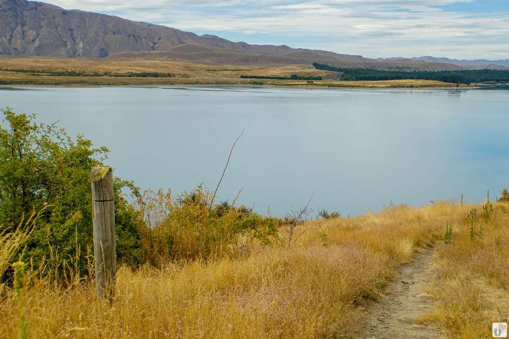 «Mount John»-Wanderweg am Ufer des «Lake Tekapo» entlang {Reisetagebuch «Roadtrip durch Neuseeland mit dem Bus»: Tekapo}