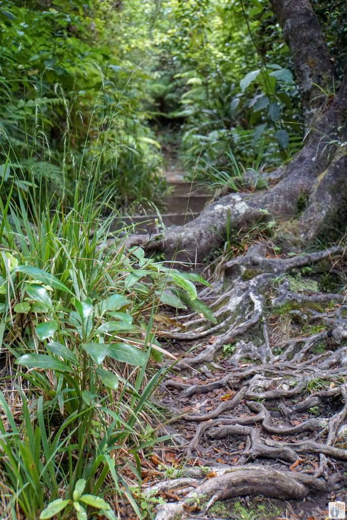 Wanderung «Mangorei Track»: Wanderweg {Reisetagebuch «Roadtrip durch Neuseeland mit dem Bus»: Egmont National Park - Mount Taranaki}