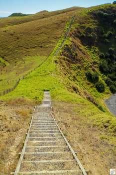 Muriwai Walk: Wanderweg {Reisetagebuch «Roadtrip durch Neuseeland mit dem Bus»: Northern Coromandel}