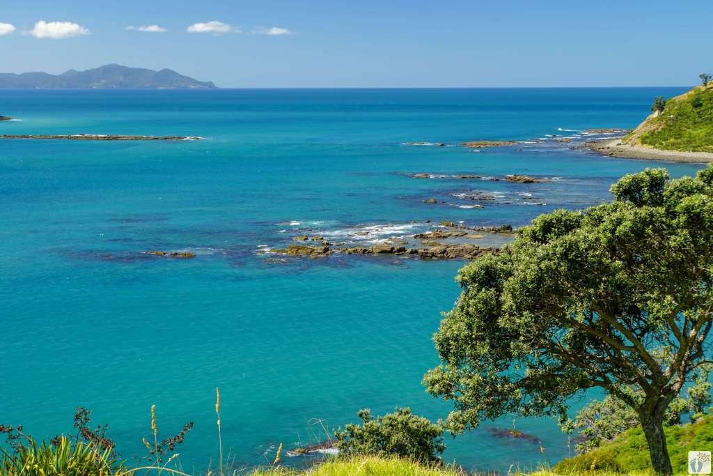 Muriwai Walk {Reisetagebuch «Roadtrip durch Neuseeland mit dem Bus»: Northern Coromandel}