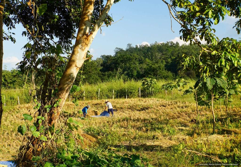 Arbeiter bei der Bamboo Bridge in der Nähe von Pai (Reisetagebuch «Thailand als Alleinreisende ohne Roller entdecken»)