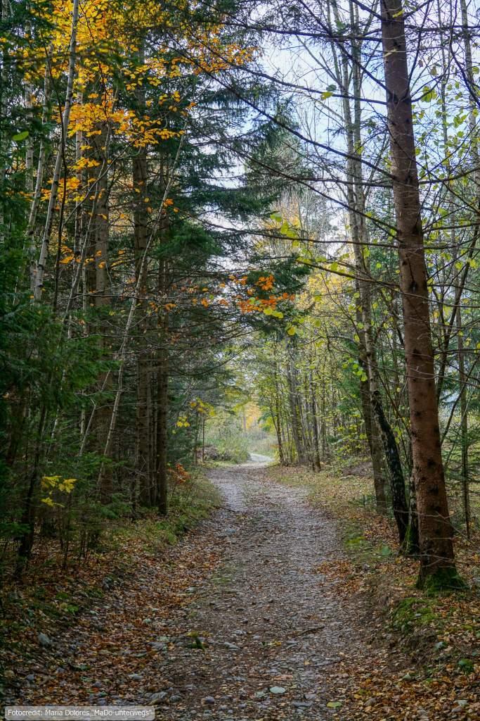Wanderung am Schneeberg: Wanderweg