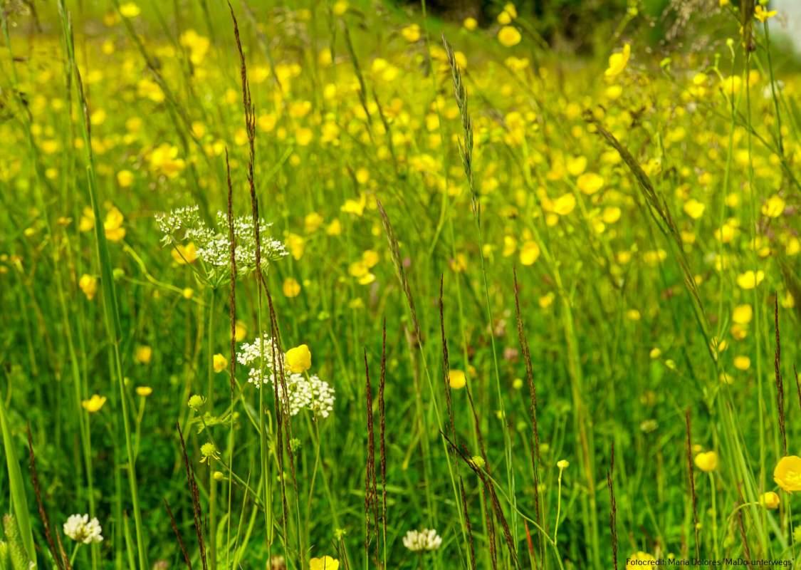 Blumenwiese auf der Schmittenhöhe_Zell am See [10 Tage Roadtrip Salzburg]