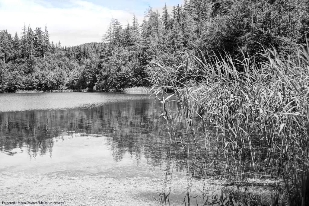 Malerischster See? Fuschlsee oder Eibensee? | 10 Tage Roadtrip Salzburg von Wasser zu Wasser 1