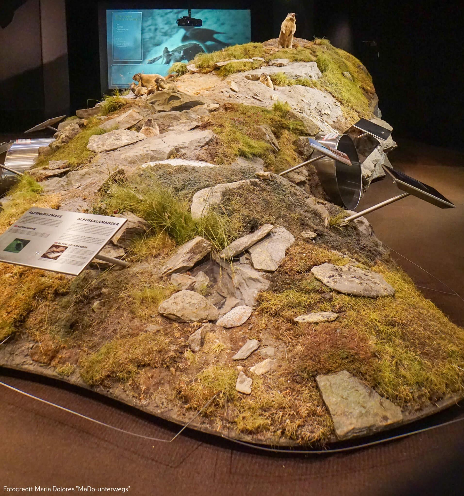 Nationalparkmuseum Mittersill: Murmeltierbau [10 Tage Roadtrip Salzburg]