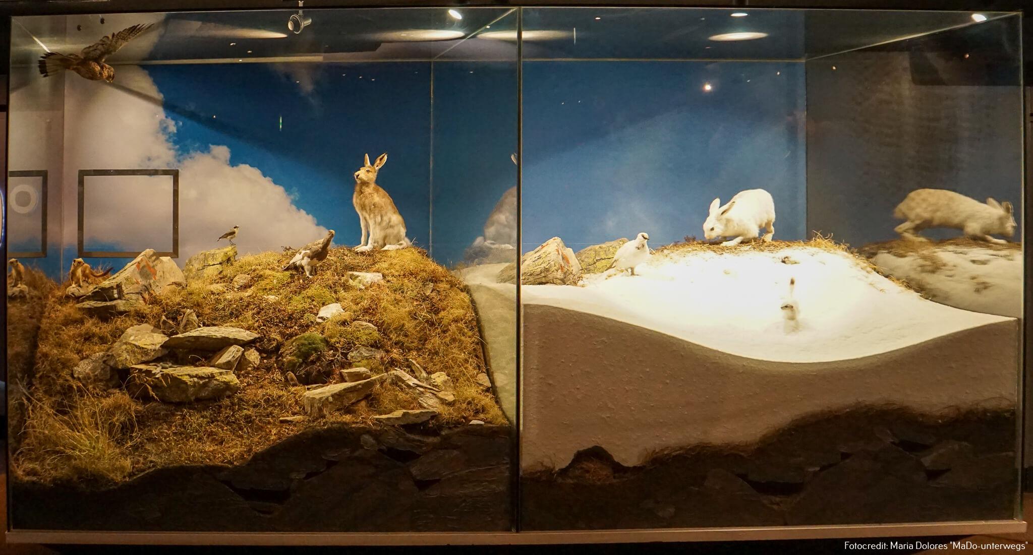 Nationalparkmuseum Mittersill: Tiere der Bergwelt im Sommer bzw. Winter [10 Tage Roadtrip Salzburg]
