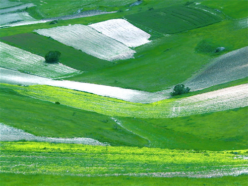 lentil fields in the Piano grande di Castelluccio