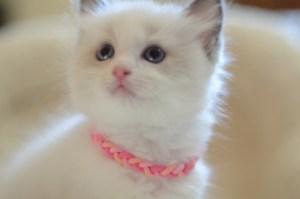 女の子ピンク(46日目)