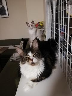 shou君先住猫と仲良く