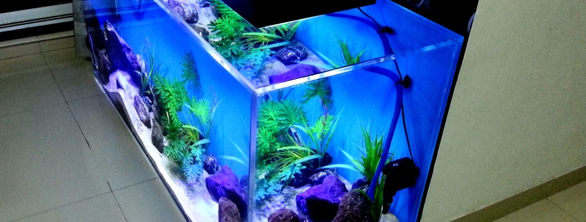 Designer aquariums in India