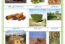 Photo of الغابات : انواعها ، فوائدها ، الاخطار التي تهددها و كيفية حمايتها