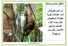 Photo of معلقات : التنقل عند الحيوانات في البر : المشي و العدو و القفز و التسلق