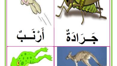 Photo of معلقات : الحيوانات التي تتنقل قفزا