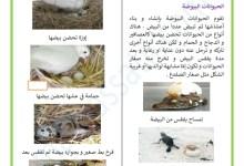 Photo of التكاثر عند الحيوانات : التكاثر عند الحيوانات البيوضة