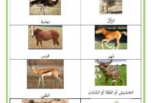 Photo of مراحل النمو عند الحيوانات – أسماء صغار الحيوانات و صورها